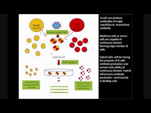 Monoclonal Antibody Production Using Hybridoma Technology Biology Notes Technology Immunology