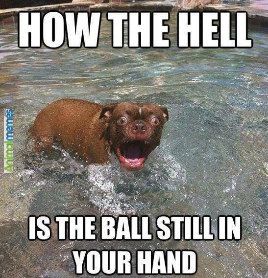 Dog memes How the hell?! ...