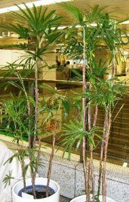 Indoor Greenhouse Apartment