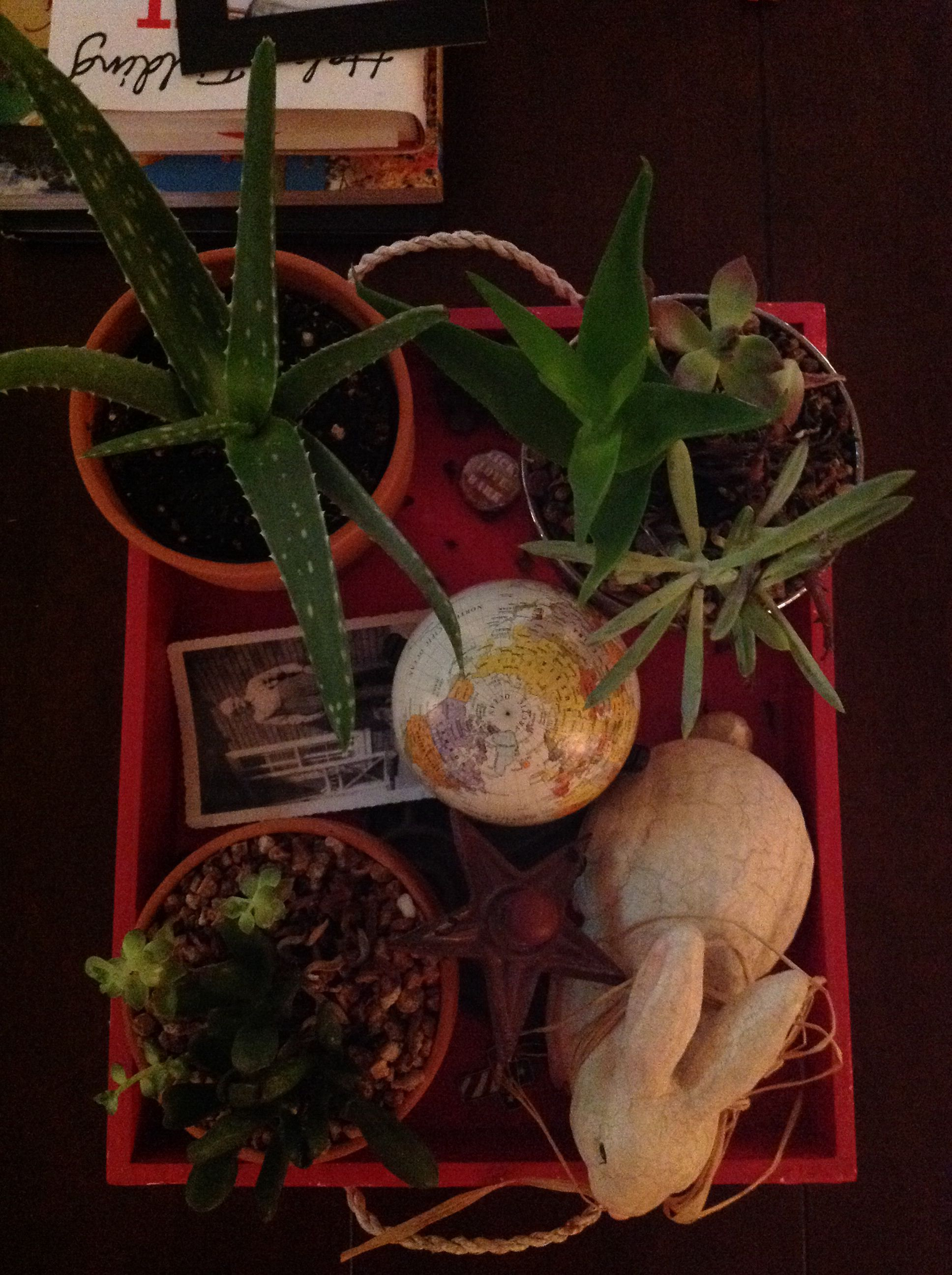 Aloe Vera Plant 3 99