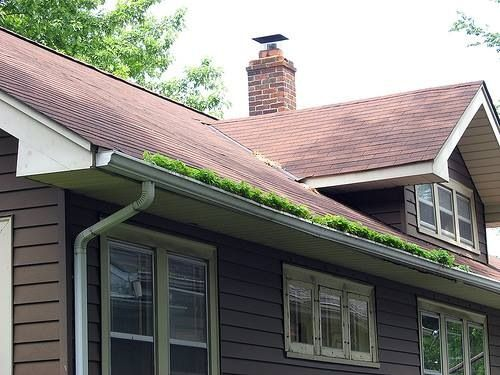 This Is A True Gutter Garden Protect Your Gutters With A Gutter Guard To Insure This Does Not Occur This Is A Problem Gutter Guard Gutter Garden Gutter