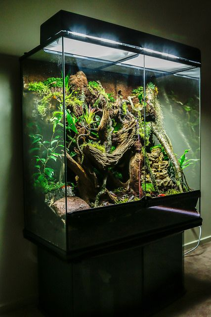Rainforest vivarium terrarios terrario y fuentes for Terrario vertical