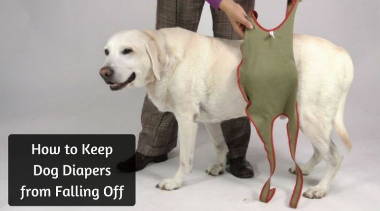 how to keep diaper on dog