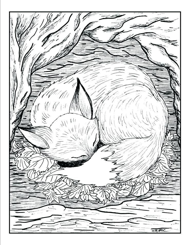 Fresh Coloring Pages Realistic Animals Download | Fox ...