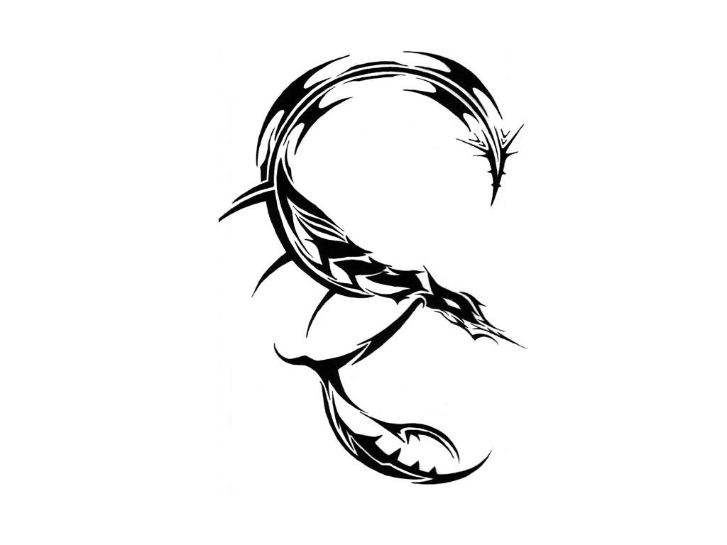 Images About Scorpion Tattoo Design On Pinterest - Tribal scorpio tattoo here my tattoo