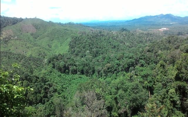 5 Tempat Wisata Di Indragiri Hilir Riau Yang Menarik Dikunjungi Tempat Kota Liburan