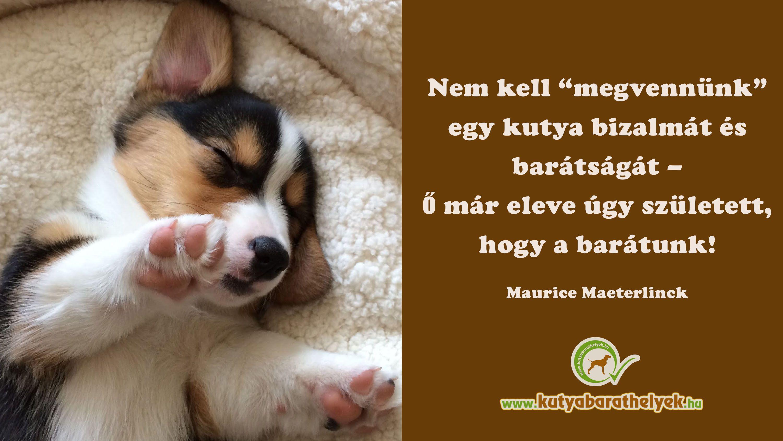 """vicces kutyás idézetek Nem kell """"megvennünk"""" egy kutya bizalmát és barátságát, – ő már"""