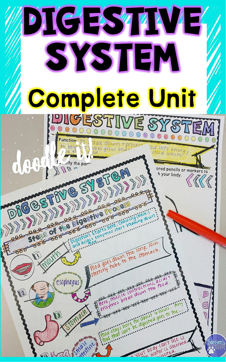 This human body resource includes a complete unit and activities to use  when teaching the digestive system to your kids. Students will learn about  ...