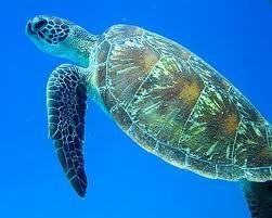 Wow Deep Sea Creatures