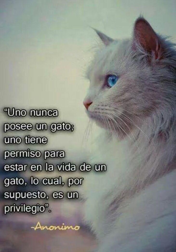 Los gatos son espíritus libres...