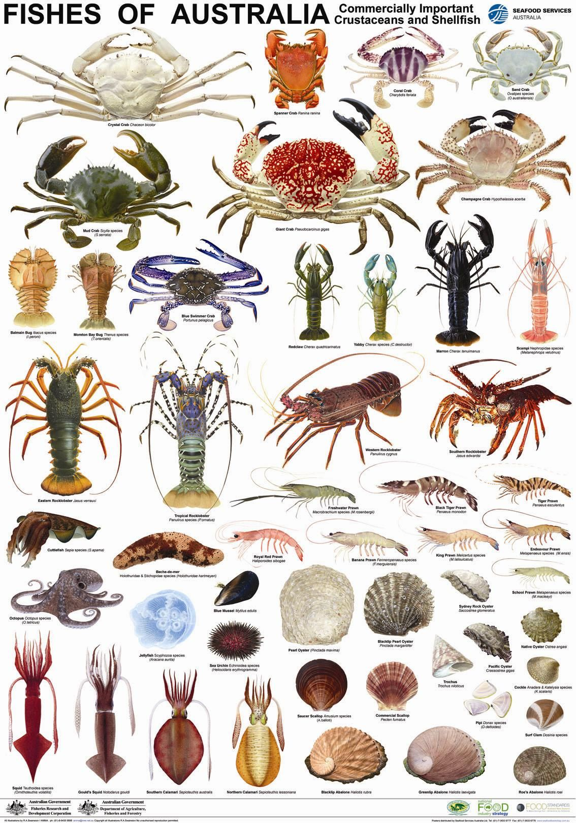 Water Animals Images Chart