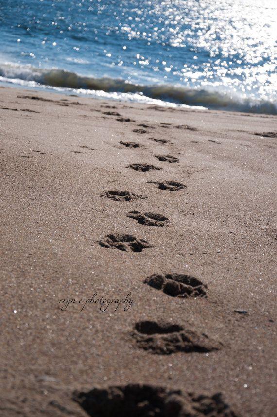 99c255f38 beach photography