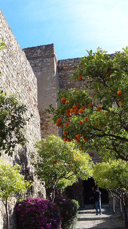 Alcazaba De Malaga Malaga Espana Andalucia Espana Malaga