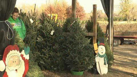 Owasso Christmas Tree Berry Farm Owasso Oklahoma Holiday Tree Owasso
