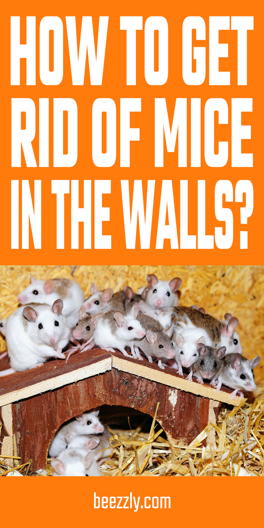 How To Get Rid Of Mice In The Walls Mouse Nest Getting Rid Of Mice Mouse Diy Household Tips
