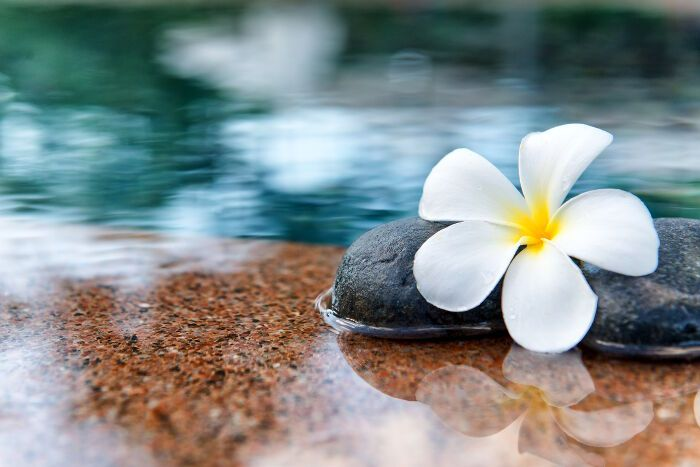 Plumeria Flower Meaning Flower Meanings Plumeria Flowers Plumeria
