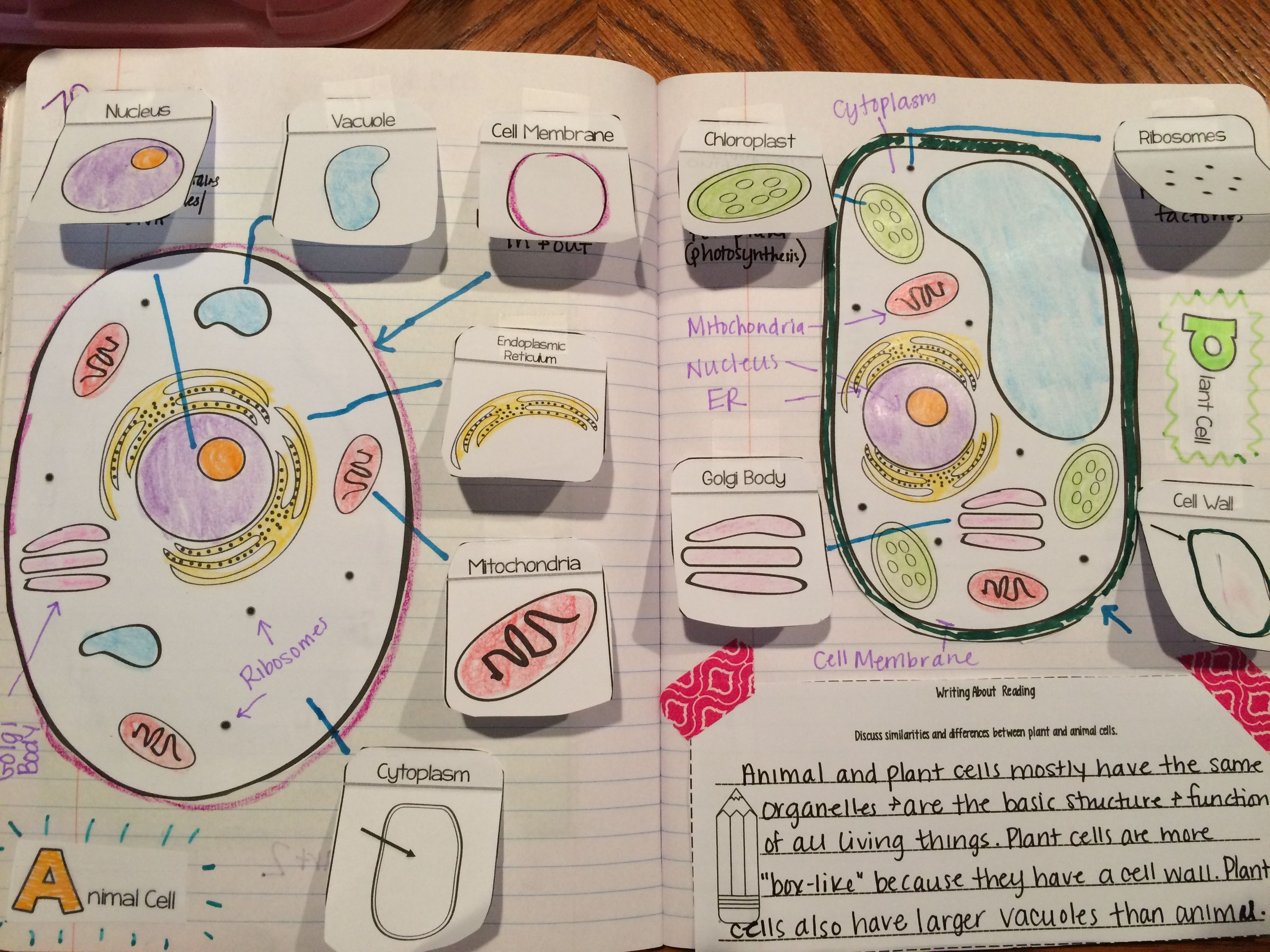 Animal And Plant Cells Organelles Read And Apply Ngss