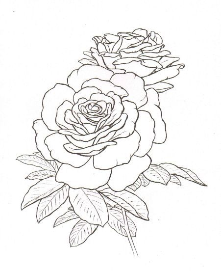 Line Drawing Rose Tattoo : Roses tattoo sketch my body is a canvas