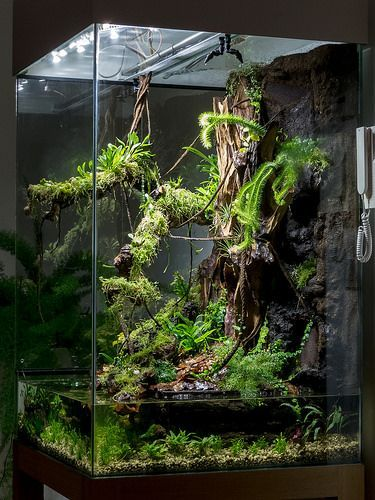 terrarium with water section looks awesome ideas for animals pinterest terraria water. Black Bedroom Furniture Sets. Home Design Ideas