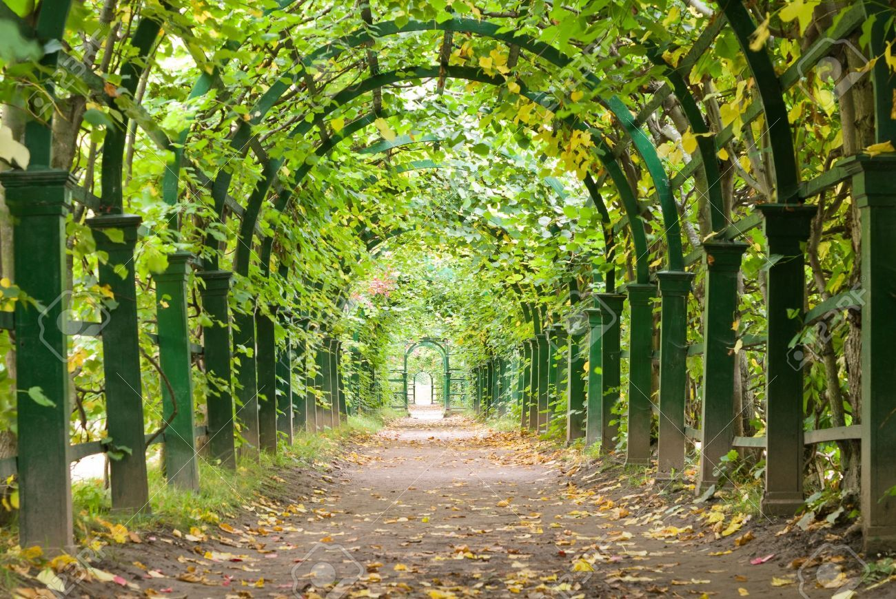 A Garden Tunnel In Peterhof Palace, St Petersburg, Russia Stock ...