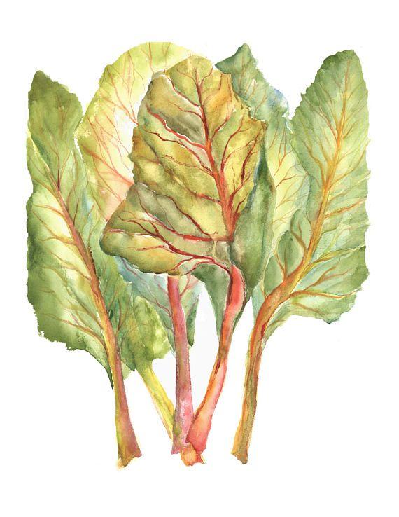 Swiss Chard Watercolors Vegetable Prints Swiss Chard Etsy In 2021 Vegetable Prints Watercolor Paintings Kitchen Artwork