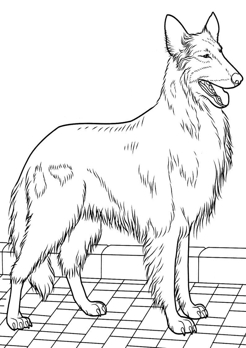 Kolorowanki Psy Malowanka Piesek Obrazek Pies Do Wydruku 7 Jpg 794 1123 Art Pages Dog Cat Printable Art