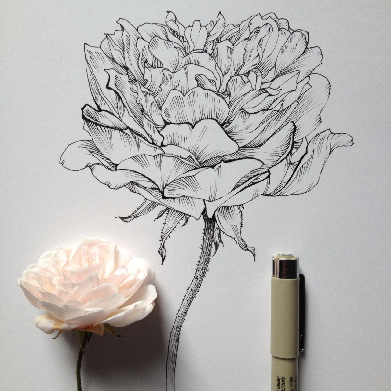 Morning rose drawing pen and ink still life pinterest giclee