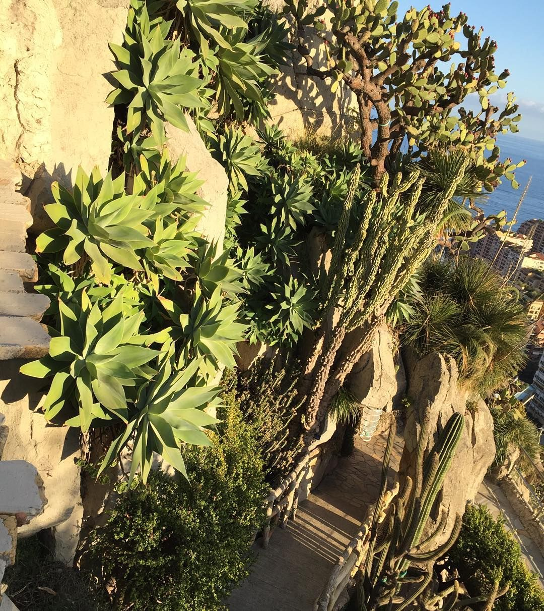 Visited Jardin Exotique De Monaco Yesterday By Ong Henry Garden