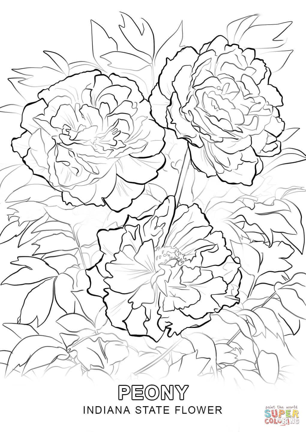 click the indiana state flower coloring pages to view printable rh pinterest com
