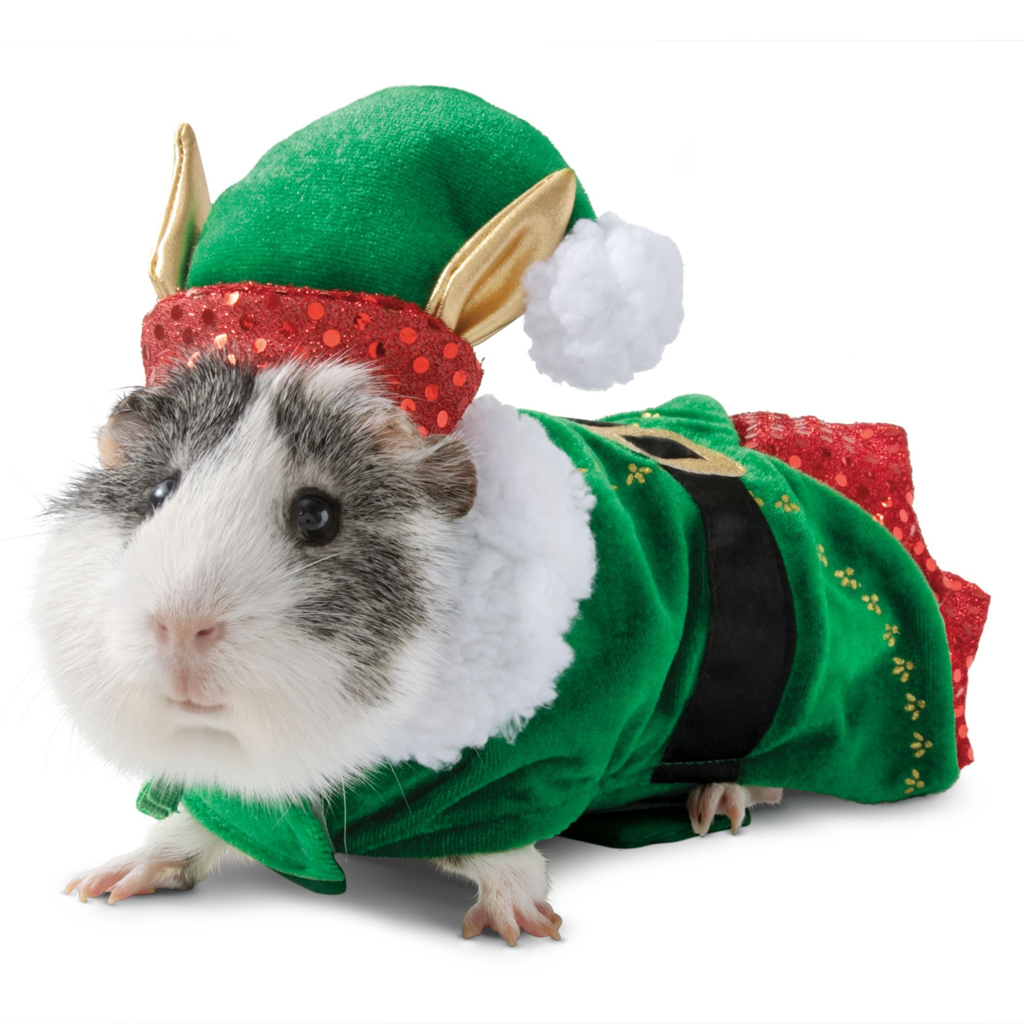 Merry and Bright, Holiday Elf Small Pet Costume, Merry