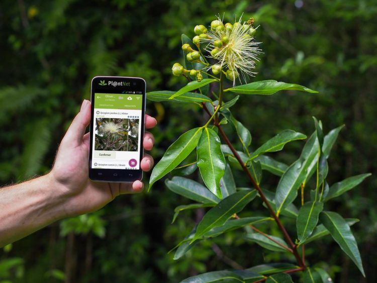 These 7 Apps Will Help You Identify Unknown Plants And