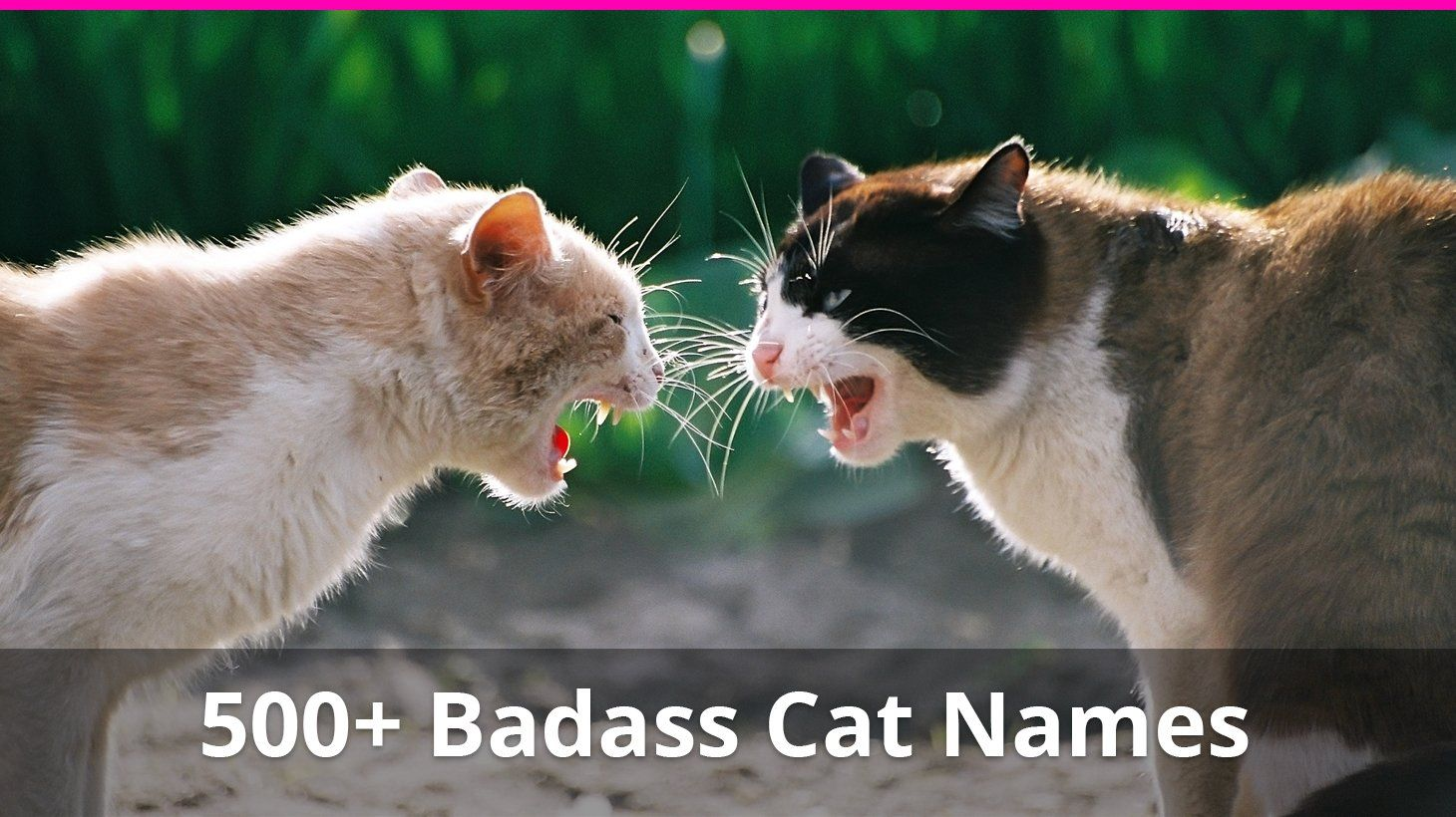 Best 500+ Badass and Tough Cat Names For Male And Female