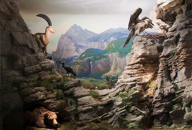Diorama Animals From The Alps In Danger With Images