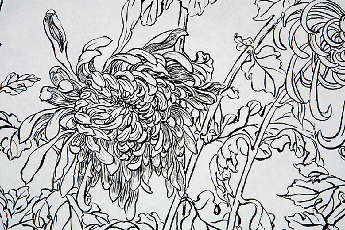 white chrysanthemum flower meaning japan