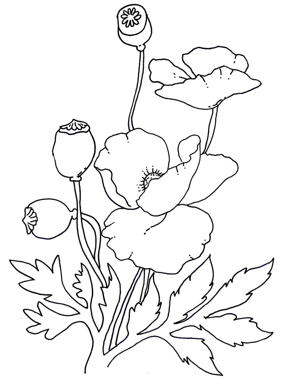 Coloring Pages Poppy Coloring Page Breadedcat Free Printable
