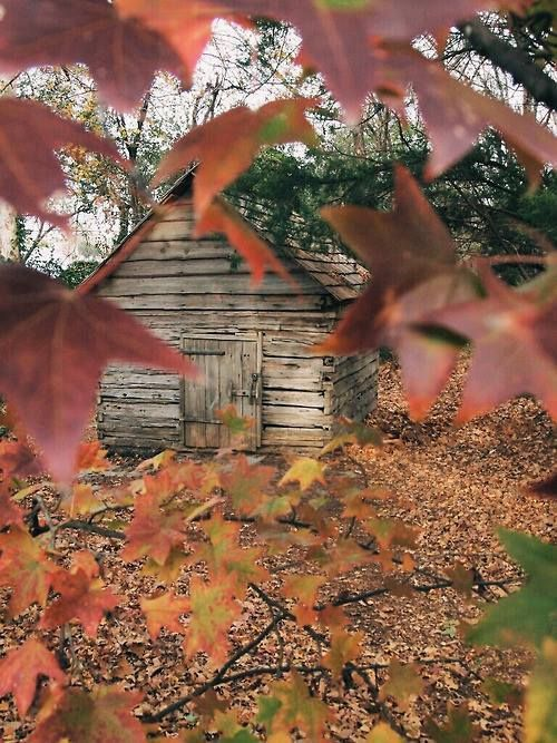 Fall into country
