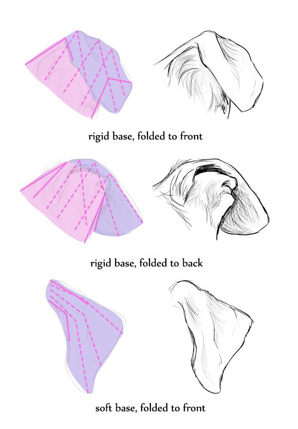 drawingdogs_7-2_ears_floppy | A3 | Pinterest | Cómo dibujar, Mejor ...