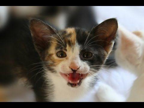 Funny Kitty Cat Fails 2016 Cat Meowing At Night Kittens Kitten