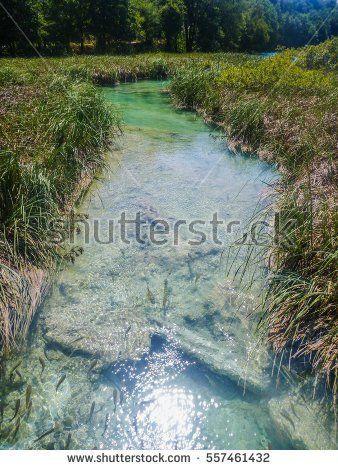 Klarer Fluss schlängelt sich durch hohes Gras