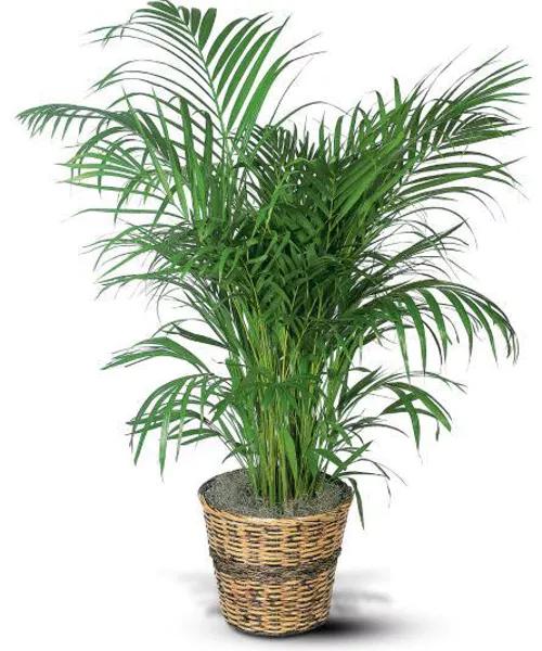 Palm Plant -   17 indoor plants Watercolor ideas