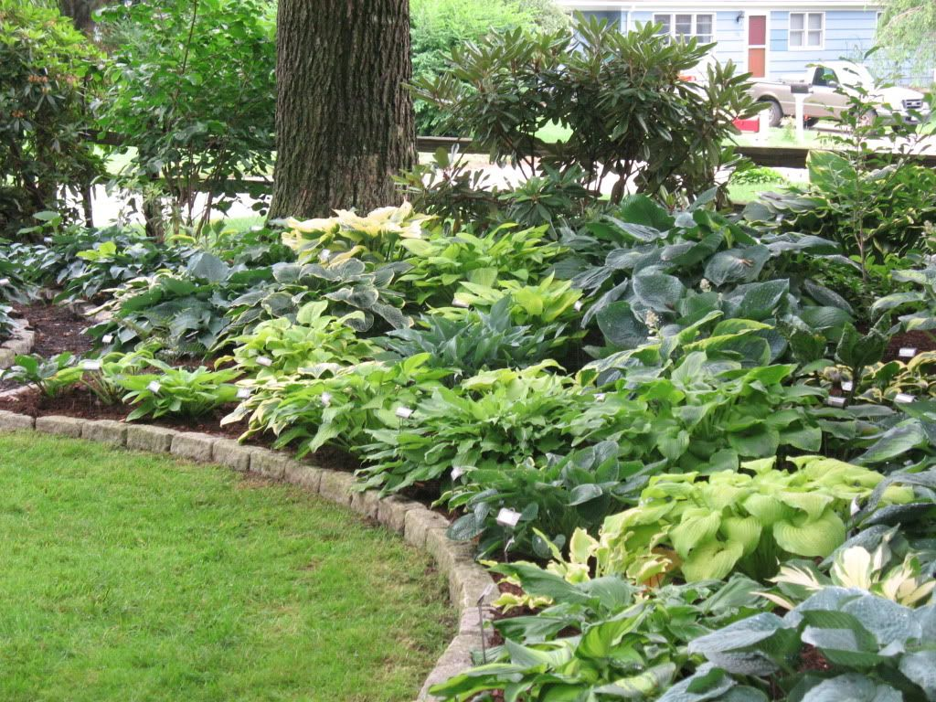 Love all the hostas height variation from mounding the for Landscaping plants
