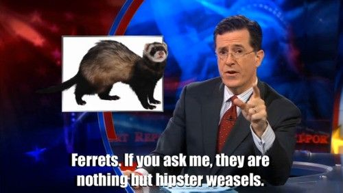 Ferrets = Hipster Weasels.