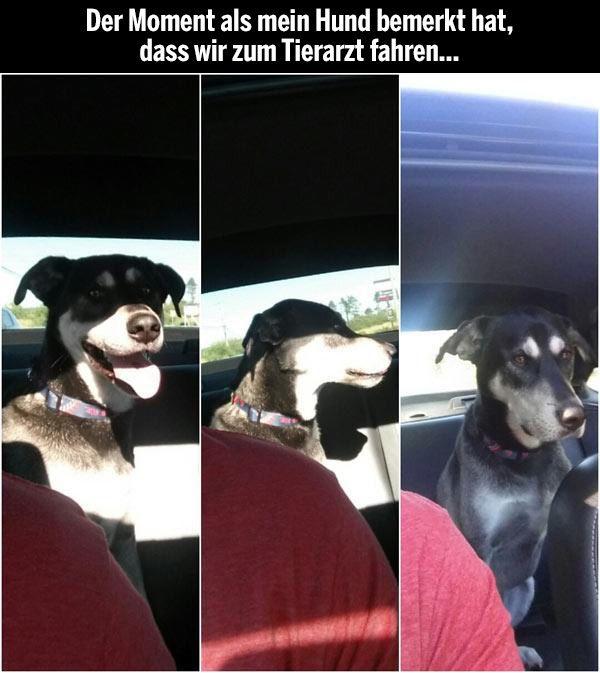 Der Moment als mein Hund bemerkt hat, dass wir zum Tierarzt fahren...