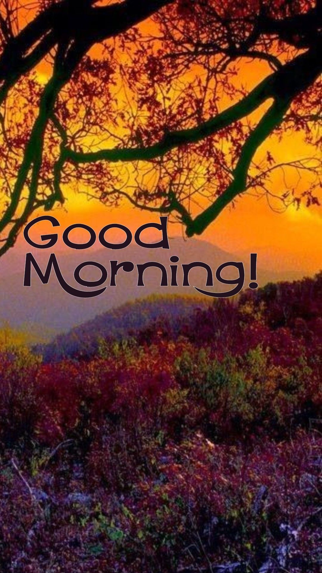 Pin By Lalit Rana On Morning Wishes Good Morning Meme Good Morning Photos Good Morning Quotes