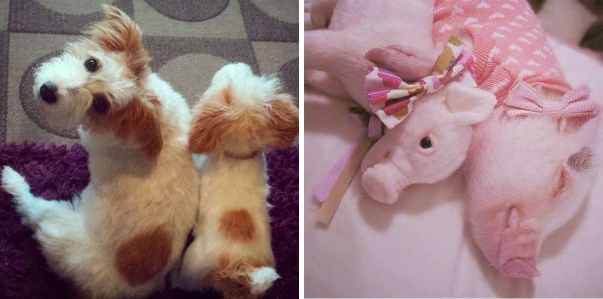 Now You Can Clone Your Pet As A Stuffed Animal If You Re Into That Your Pet Pets Animals