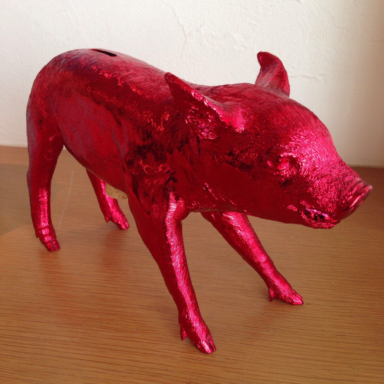 My friend's PIG♡