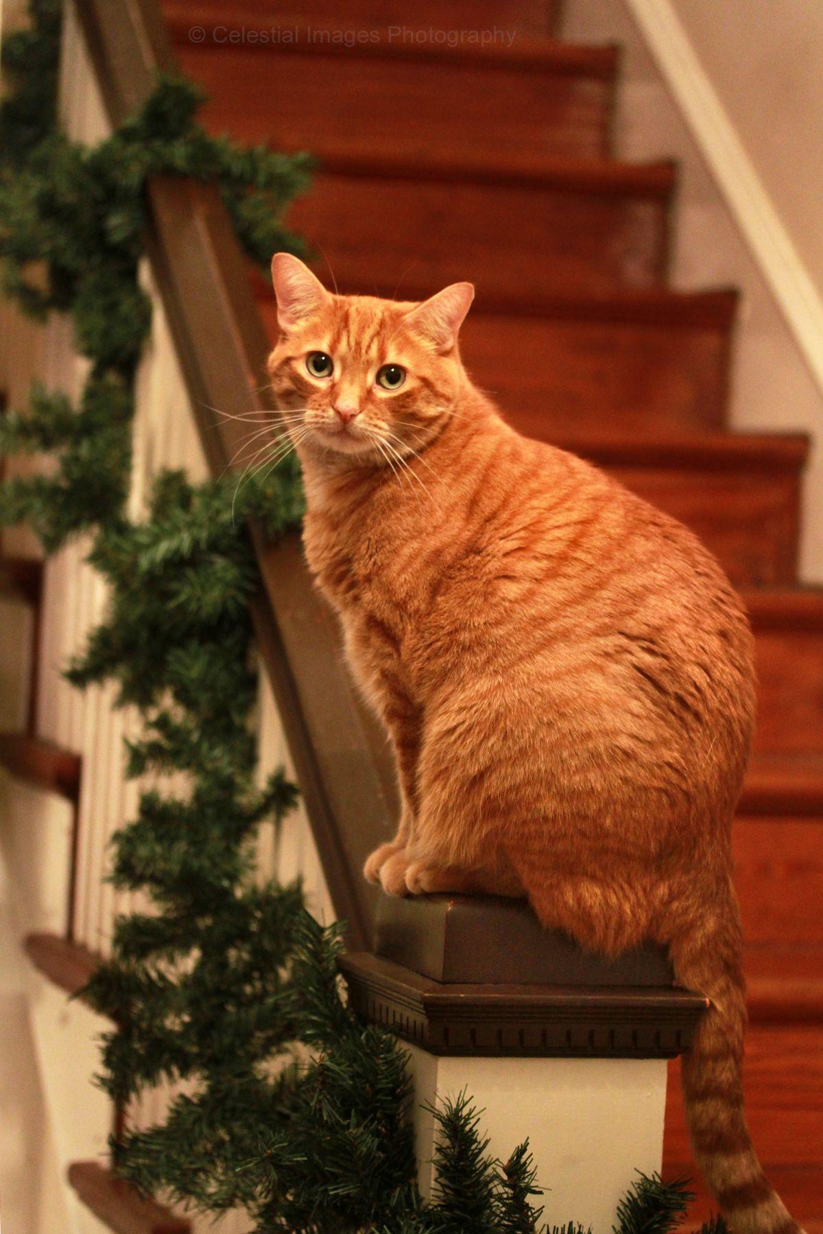 Mischief and Mayhem Orange cats, Ginger cats, Tabby cat