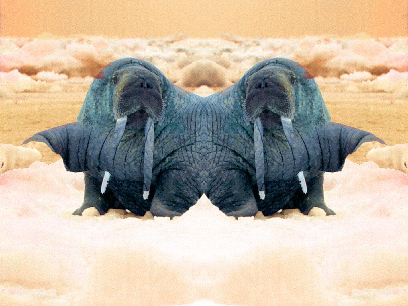 Duplo Walrus