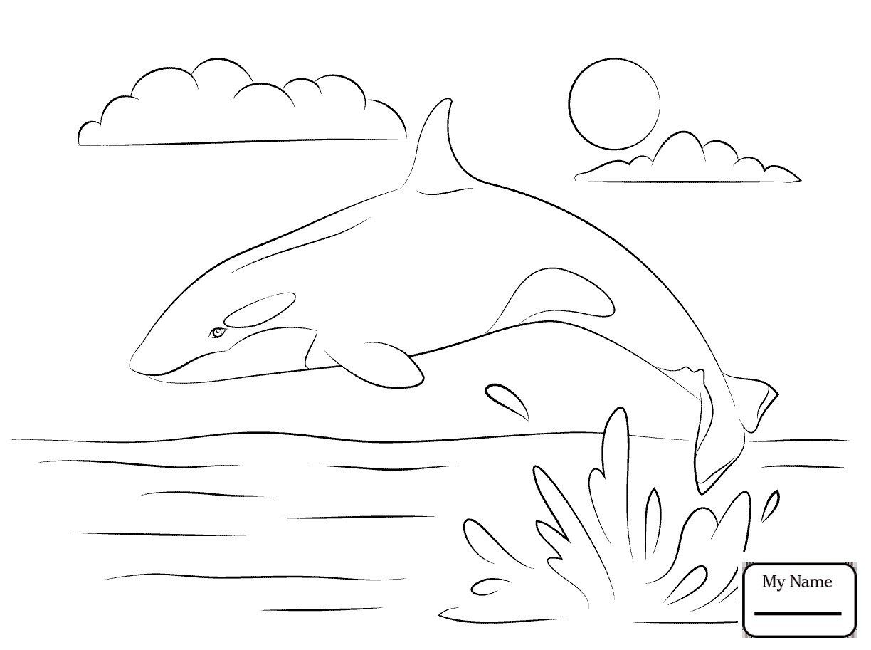 Wonderful Image Of Orca Coloring Pages