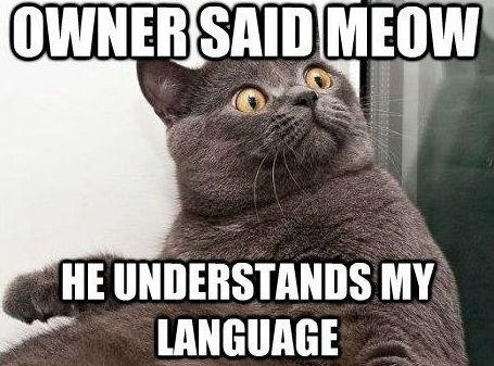 Owner Said Meow He Understands My Language With Images Cat